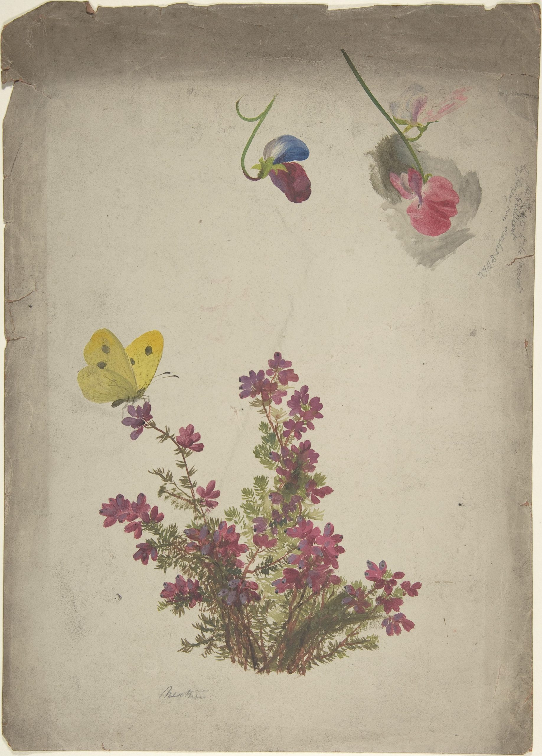 Heather, Sweet Peas and Butterfly